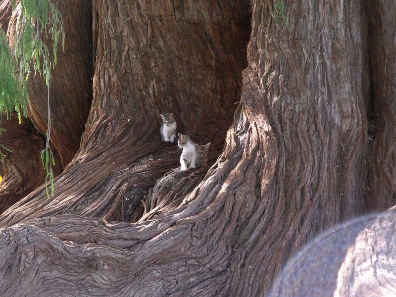 дерево Туле (2)