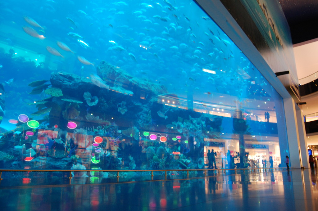 DubaiMallAquariumDSC_7260